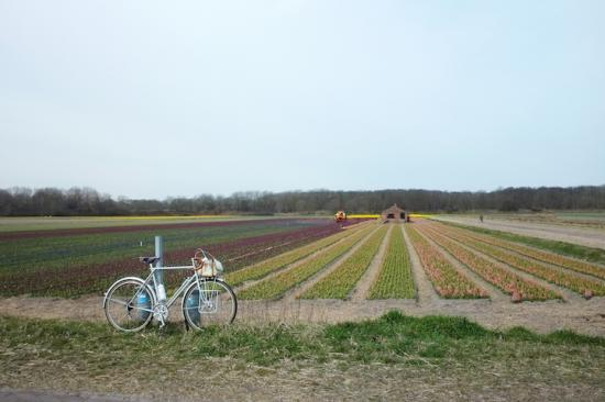 Cuộc sống bình yên qua con mắt người mê… xe đạp 4