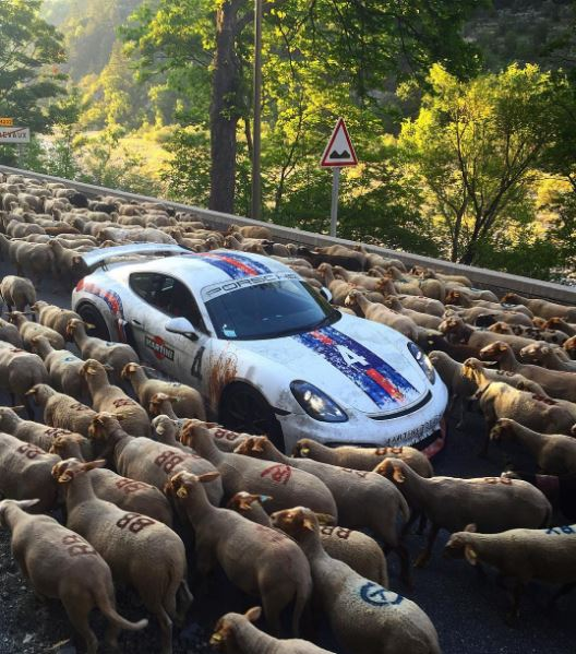 Siêu xe tắc đường vì cừu 1