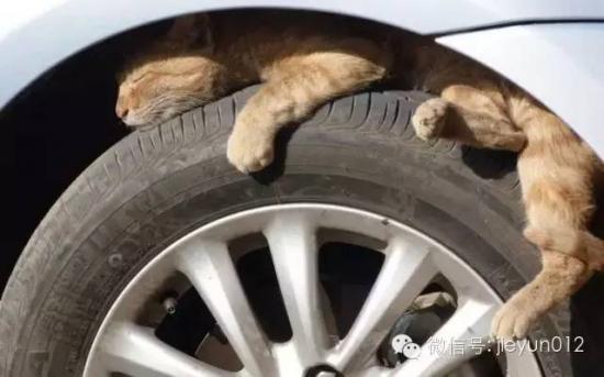 mèo chui trong xe1