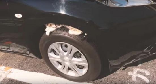 mèo chui trong xe2